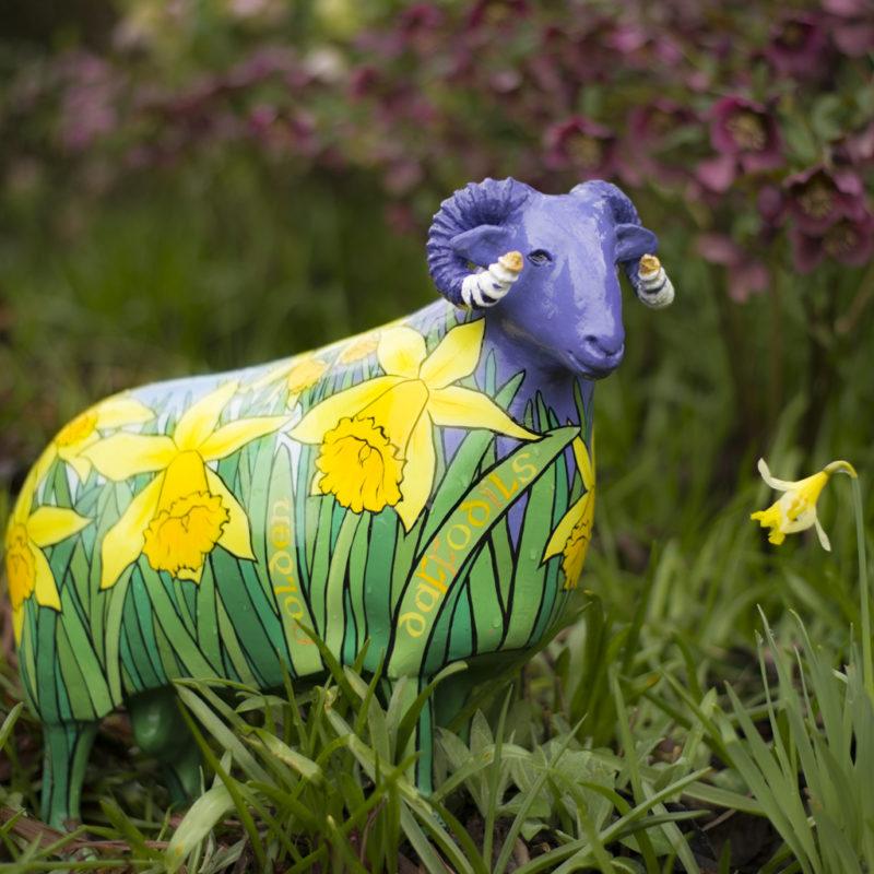 Daffodil ram
